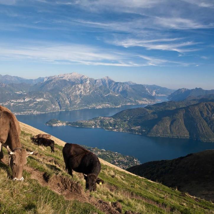 Pascoli in media e alta montagna sulle Alpi