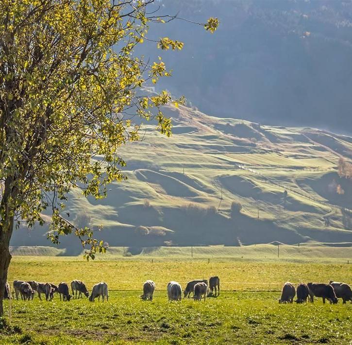 Territorio accogliente e spazi ampi per il benessere del bestiame