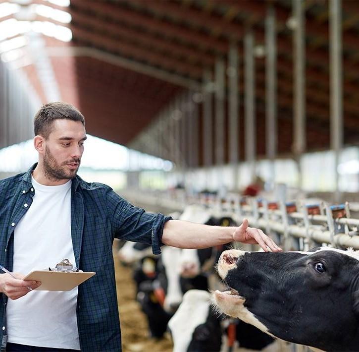 La genuinità del latte munto in provincia di Sondrio
