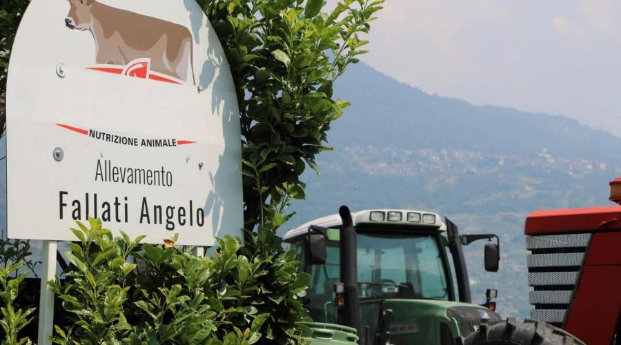 Aziende agricole: Immagine 4